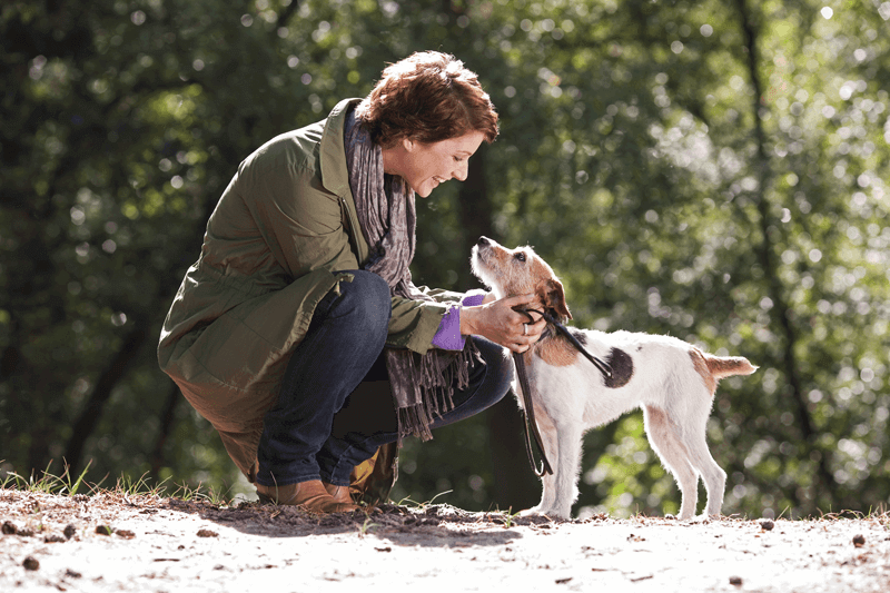 12 Feuchtfutter für Hunde überzeugen im Test der Stiftung Warentest