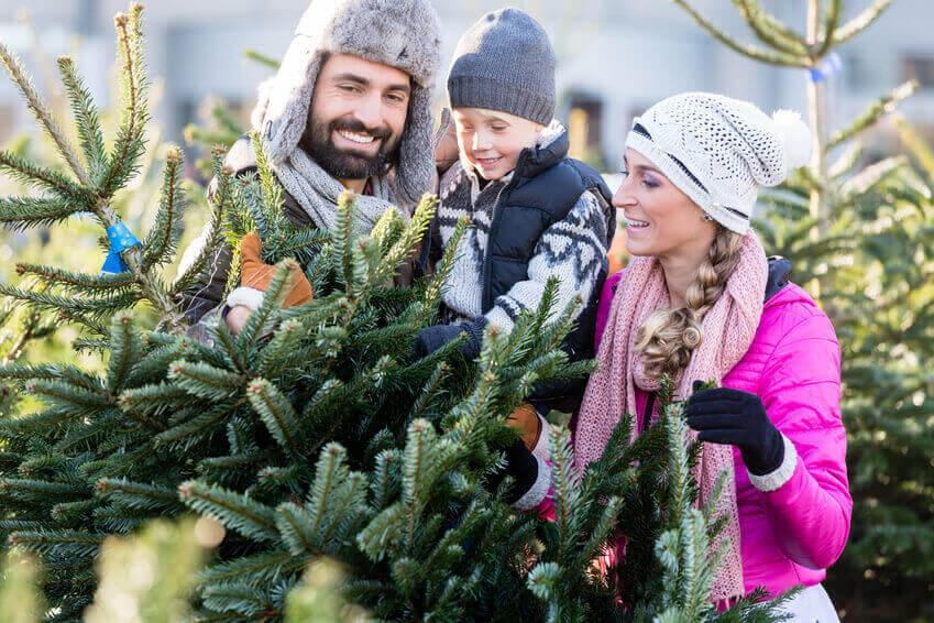 Weihnachtsbaum-kaufen