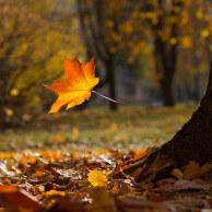 Foto: Sergeid | Dreamstime.com